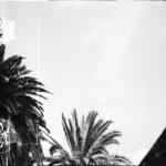palmenfenster